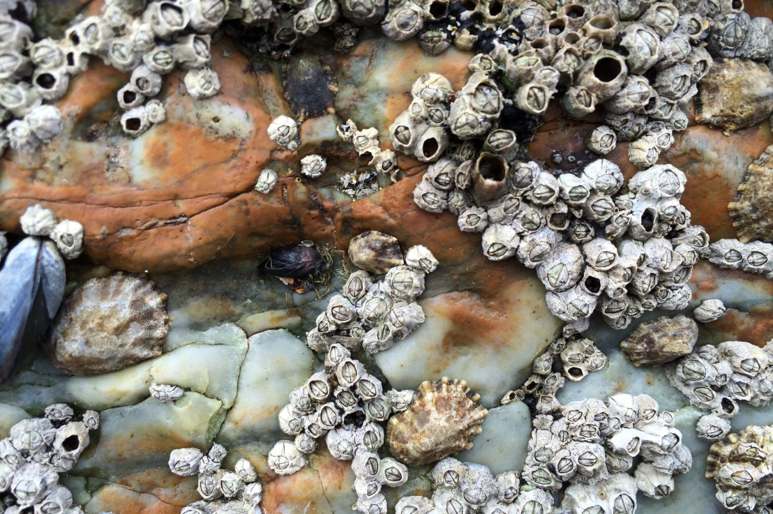 Ephemeral: On Mussels & Barnacles I