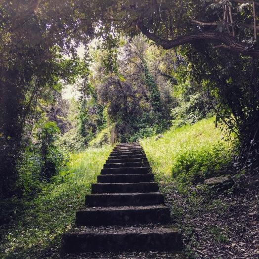 Enchanted woodland. alexia medici